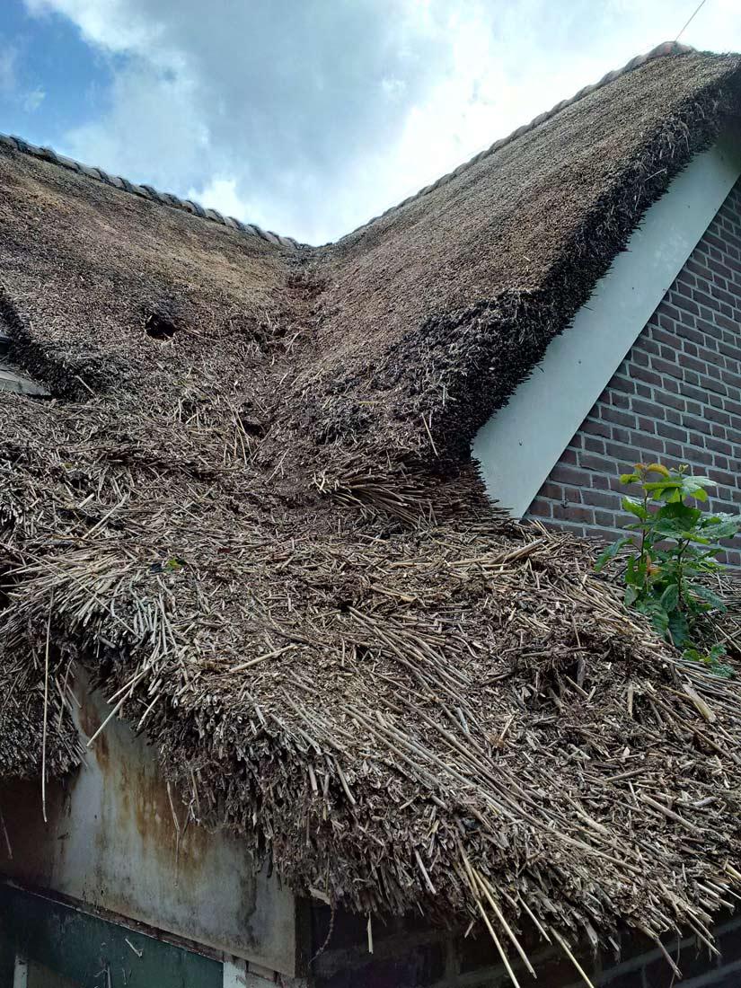 Onderhoud, onderhoud rieten dak huis ter heide