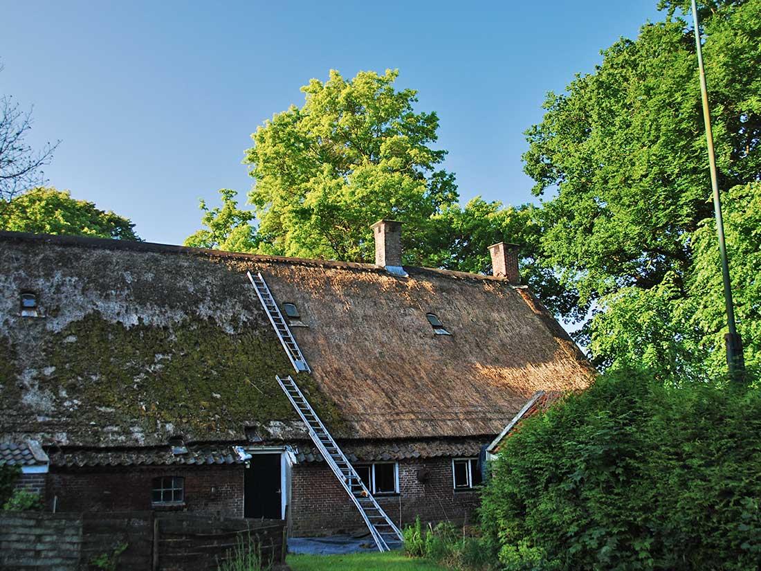 Onderhoud, Verwijderen algen en mos rieten dak