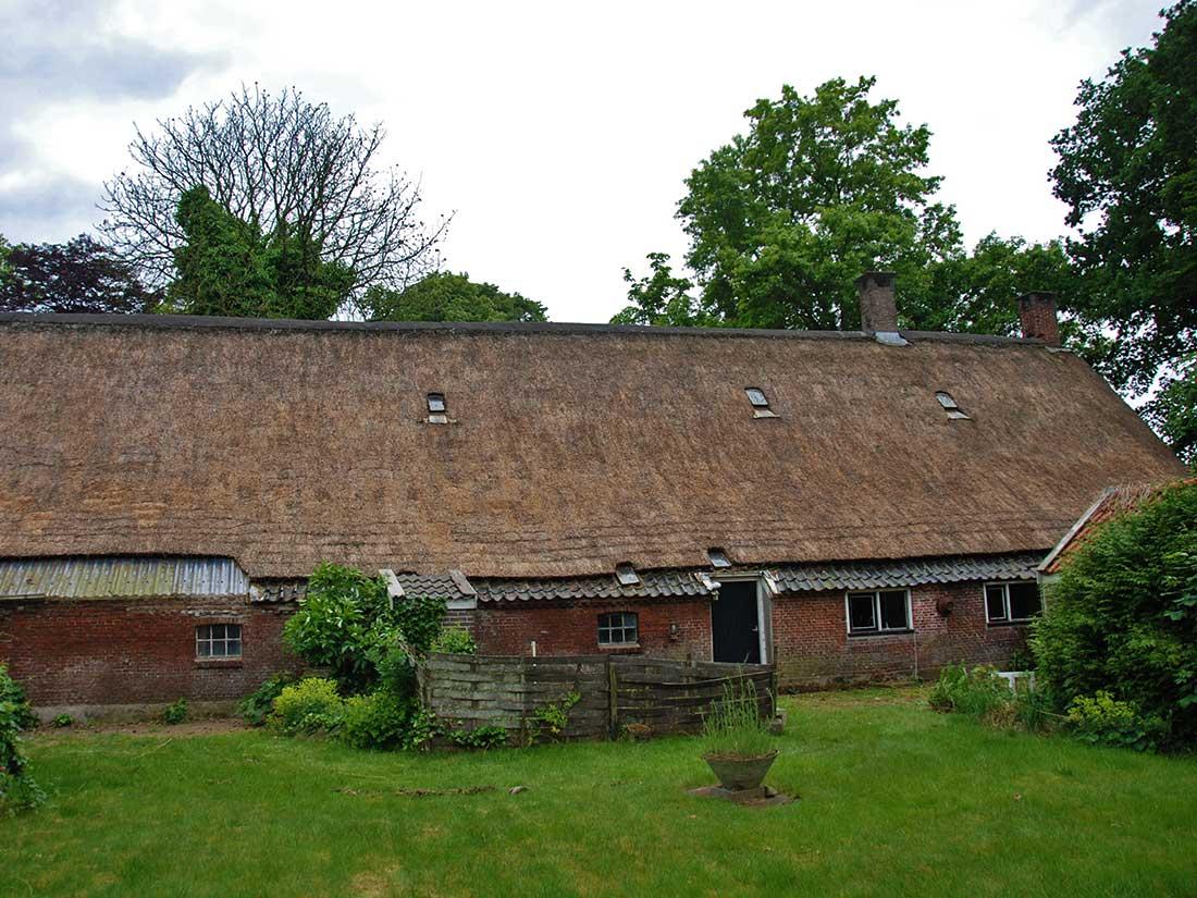 Onderhoud, Algen en mos verwijdering rieten dak
