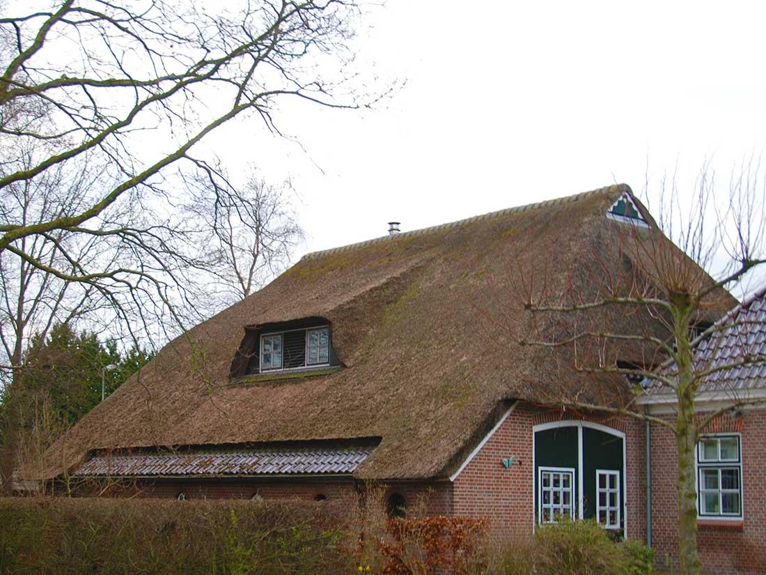 Assen - Onderhoud rieten dak