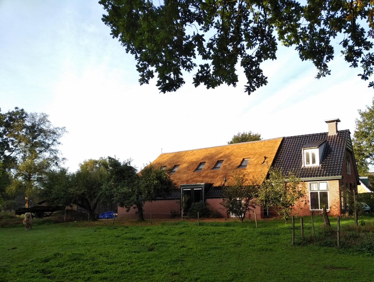 westervelde - Vervangen rieten dak te Westervelde