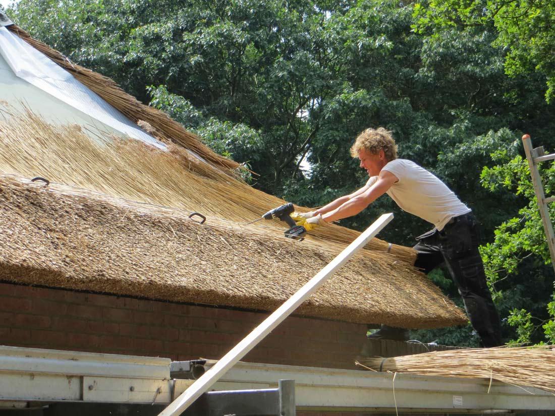 Zuidlaren  | vernieuwen rieten dak door rietdekker